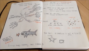 sketchStarfish
